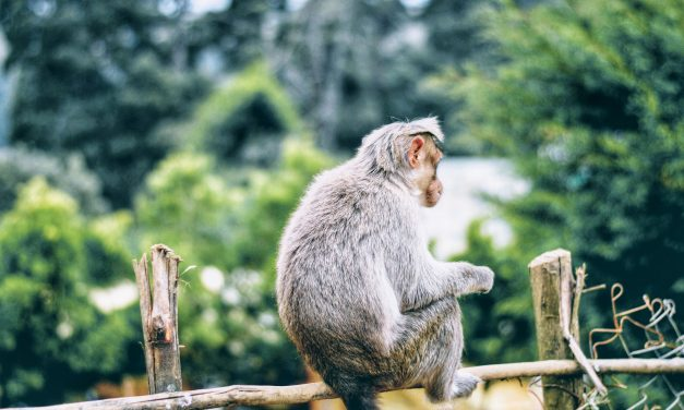 How To Not Lose Yourself In A Relationship— Make Him A Monkey